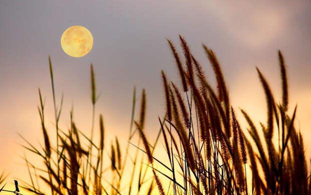 Влияние Луны - правда или миф?