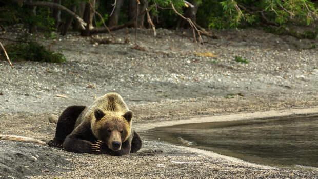 Инспекторы застрелили медведя, убившего подростка в краснодарском парке