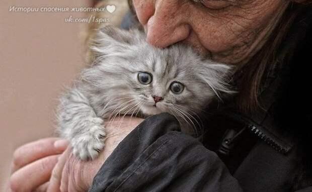 """Приют """"Второй шанс""""! ● Истории спасения животных ●"""