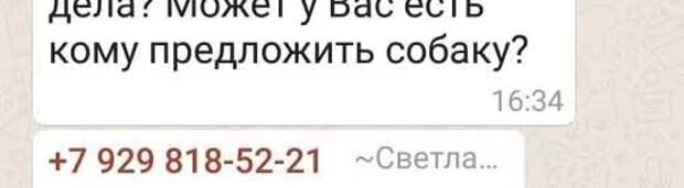 Ростов или близлежащие города! Лабрадор, 3 года, очень добрый и послушный