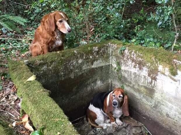 Пес охранял оказавшегося в ловушке друга целую неделю, пока их не спасли!