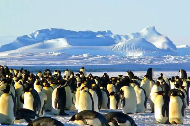 Япония выдвинула территориальные претензии России в Антарктиде