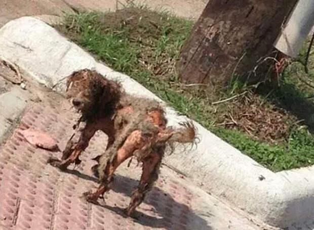 Как одна фотография спасла собаке жизнь