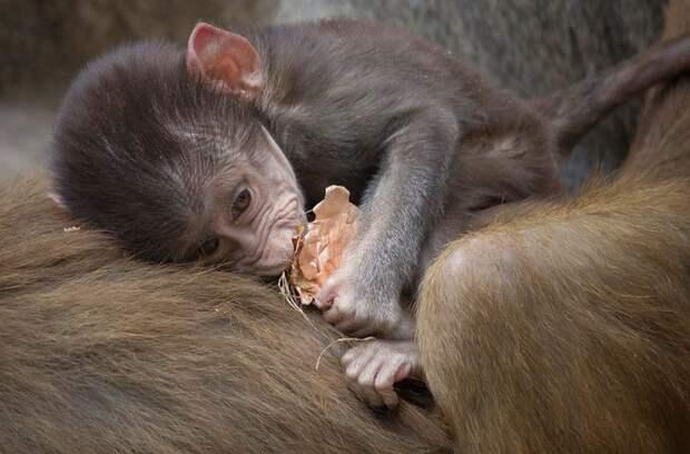 19 мимимишных фотографий животных, которые недавно появивились на свет
