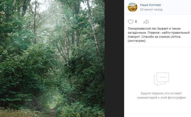 Фото дня: в глубине Тимирязевского леса