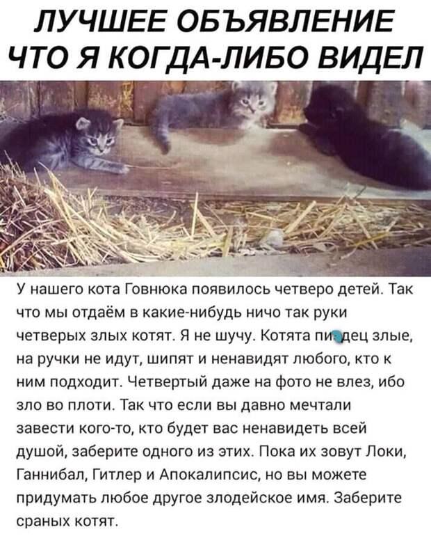 Сторож завода по производству шампуня Сидоров с пеной у рта доказывал, что он не ворует