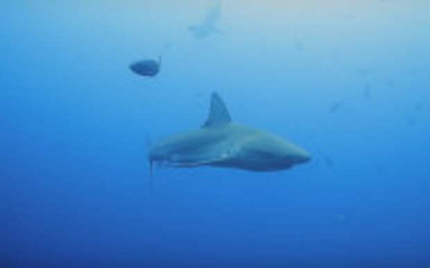 Израильтянам акулы – между ног: несмотря на запреты, народ с малыми детьми повалил к морским хищникам. ВИДЕО