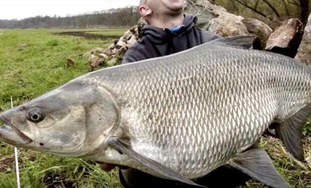 Аномально большие рыбы, которых вытащили из рек России