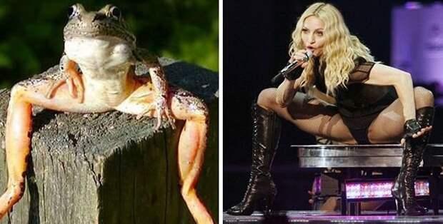 Мадонна-мадонной, а если ещё и голос совпадает... животные, копии, юмор