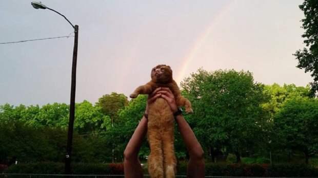 Целебный кот Расселл: идет направо — песнь заводит