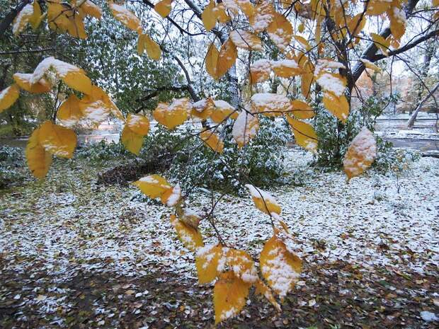 В Забайкалье выпадет снег