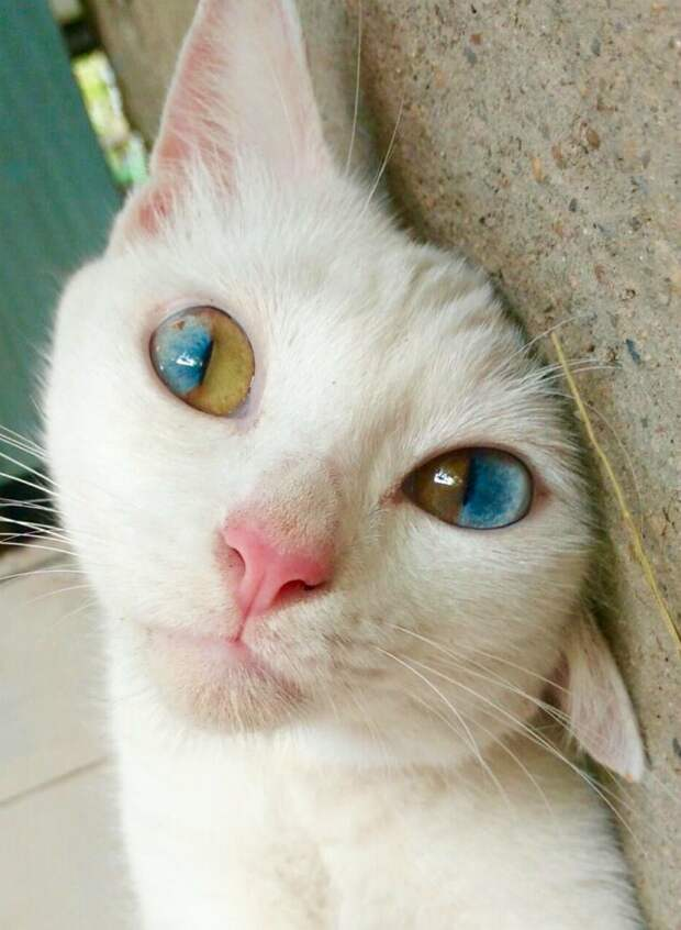18. Завораживающий цвет кошачьих глаз