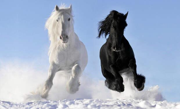 Снежные лошади