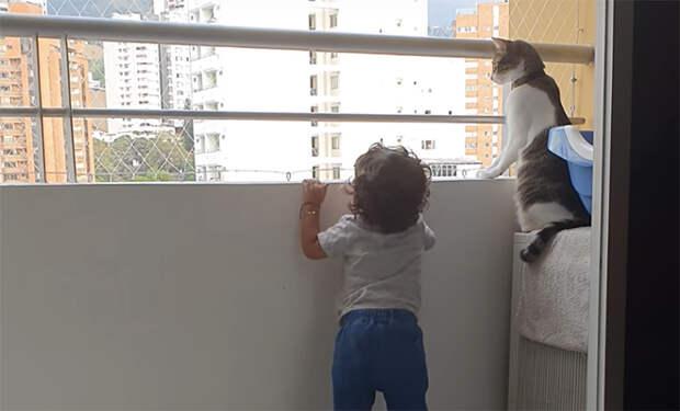 Ребенок хотел высунуться за парапет балкона, но кошка была рядом и не пустила его