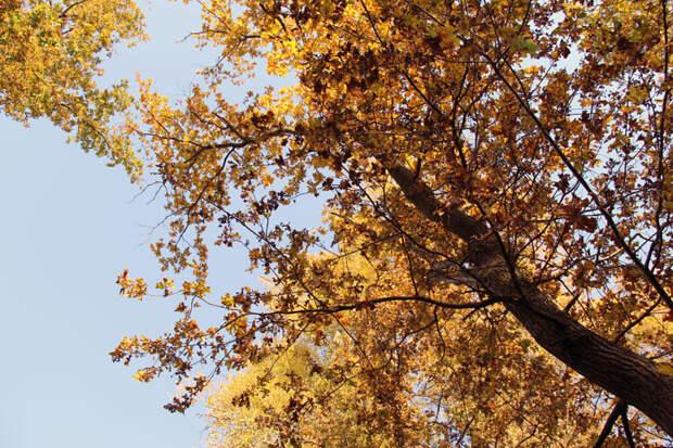 смотреть золотая осень