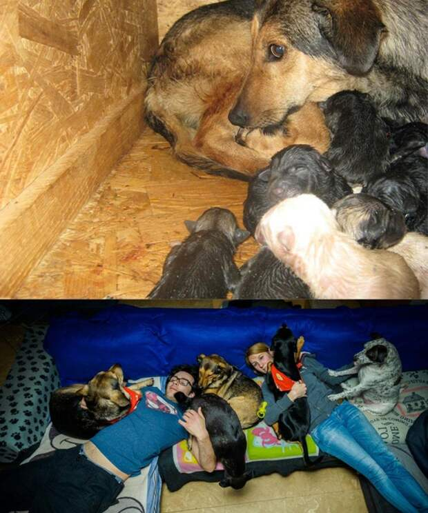 25 преобразившихся животных до и после того, как их забрали из приюта