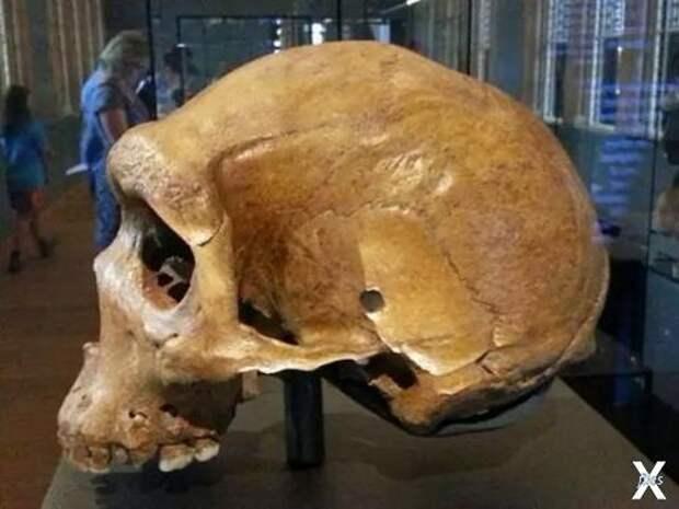 Кто стрелял в этого неандертальца? Тайна древних черепов с пулевыми отверстиями