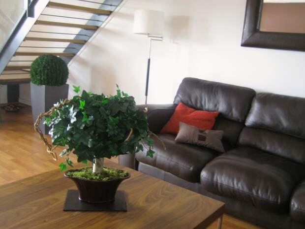 Мини дерево в интерьере комнаты
