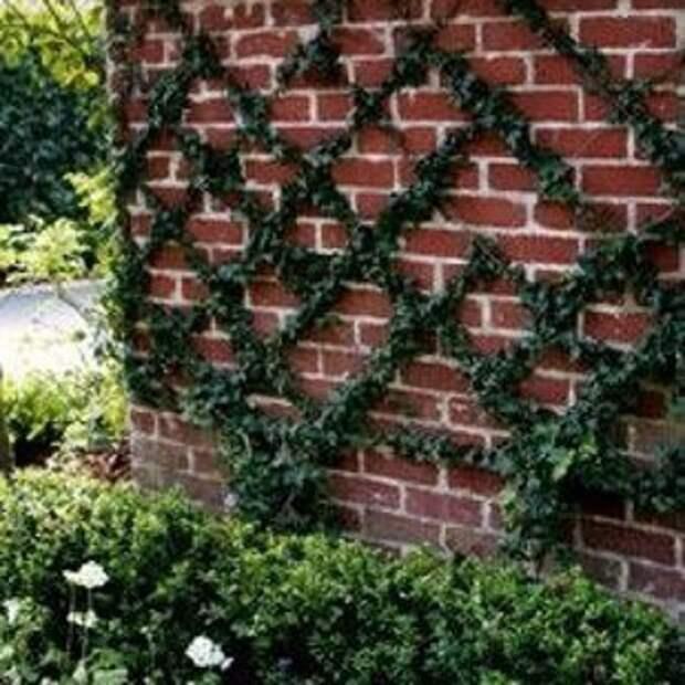 Зачем нужны пуговицы в саду?