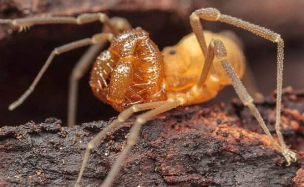 В США нашли новый вид паука
