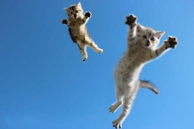 Фотографии котов, сделанных в самый нужный момент
