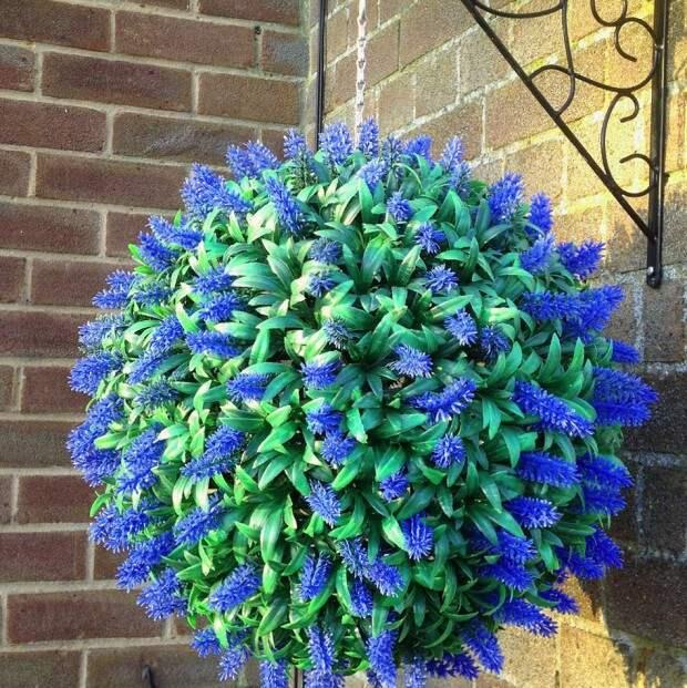 Топиарий с синими цветками