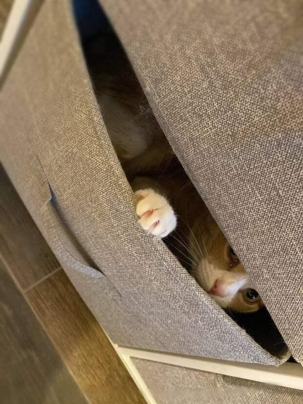 За ними только глаз да глаз: 14 своевольных котов