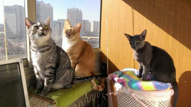 Даёшь каждой кошке по своему окошку!