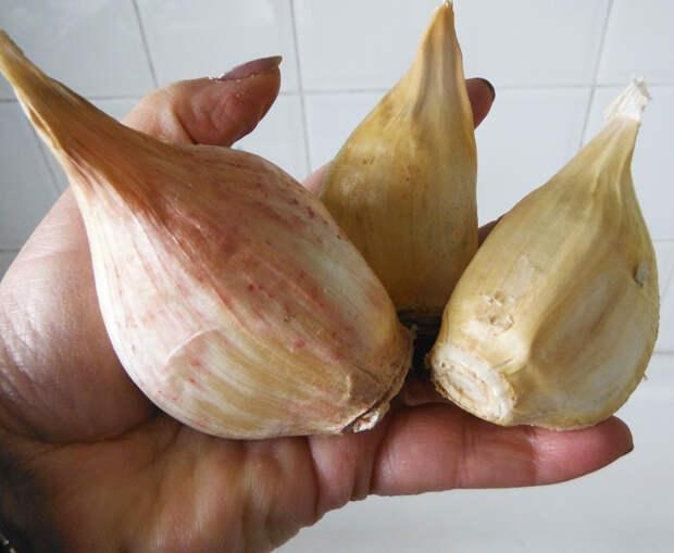 Elephant Garlic.