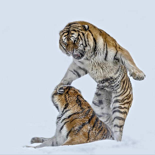 Лучшие кадры дикой природы