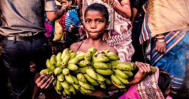 У бананов своя «пандемия» из-за которой мы можем лишиться любимых фруктов