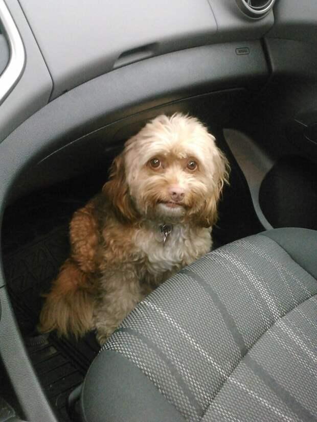 23. Собака, которую не сдвинуть с места ветеринар, животные, милота, собаки