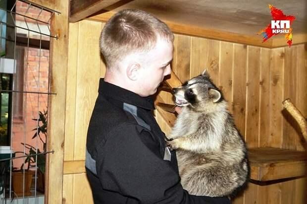 А раньше Сема был ласковым и даже позволял брать себя на ручки. Фото: пресс-служба ГУФСИН по Свердловской области.