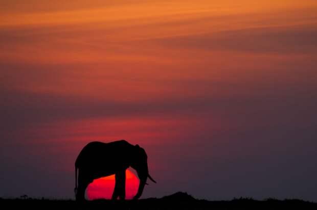 afrikanskie zakaty 10 Потрясающие африканские закаты от Пола Гольдштейна