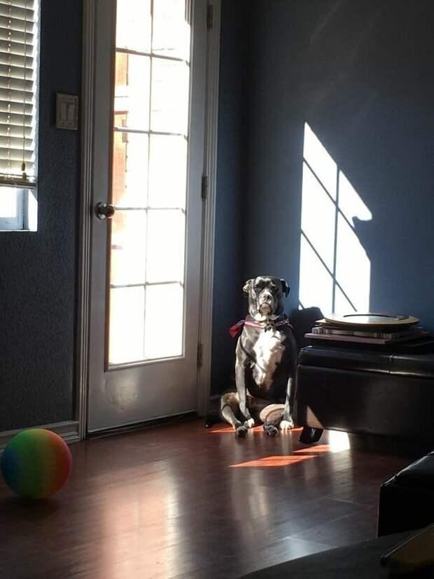 41. Солнечные ванны  баловство, животные, питомец, поведение, собака, странность, юмор
