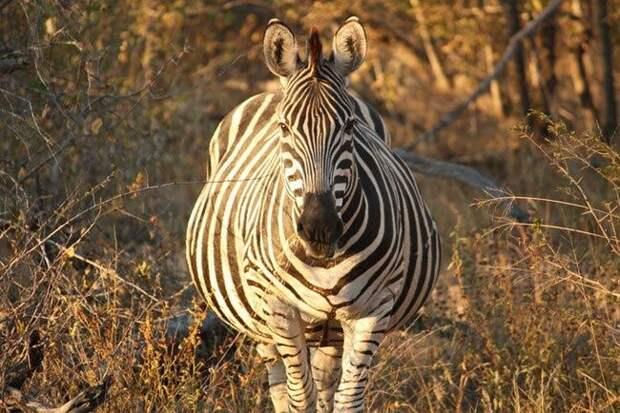 ТЕРЕМОК. Очаровательные животные в интересном положении