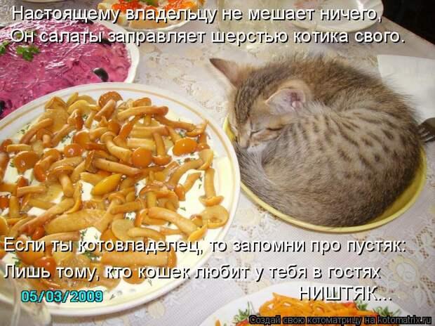 Котоматрица: Настоящему владельцу не мешает ничего, Он салаты заправляет шерстью котика свого. Если ты котовладелец, то запомни про пустяк: Лишь тому, кт