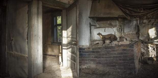 Волшебные фото заброшенных домов, занятых дикими зверями