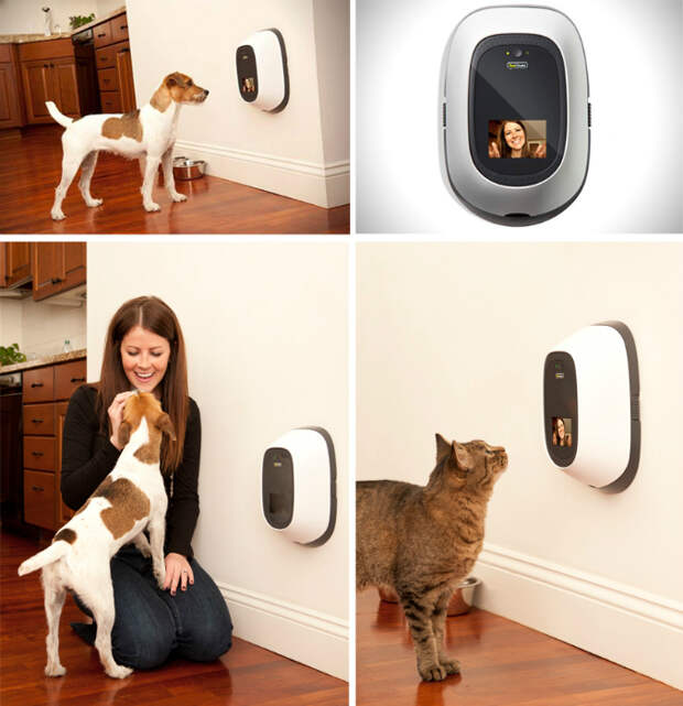 Первый в мире видеотелефон для животных, который раздает лакомства и позволяет всегда оставаться на связи с домашним любимцем.