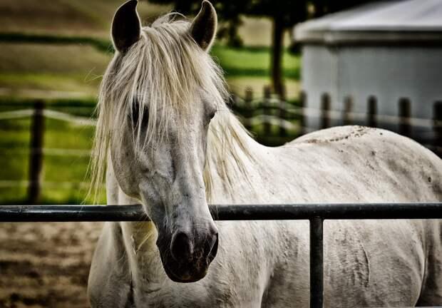 Будущее лошади, которая откусила палец девочки, решит Следком