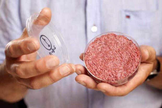 Для любознательных. Как создают синтетическое мясо