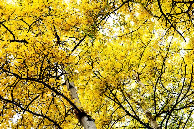 Осень в Национальном парке Денали