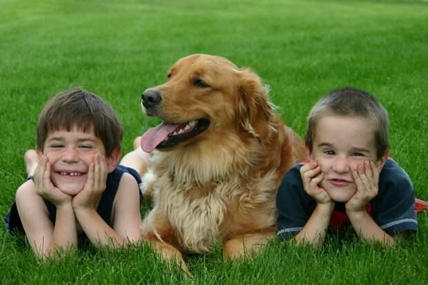 7. Собака укрепляет семью! дети, домашние животные, собака, собаки