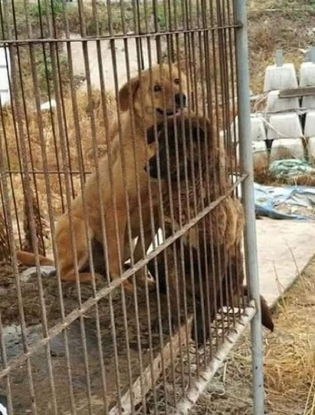 Собачек нужно было срочно спасать, ведь хозяин собрался продать их на собачью ферму