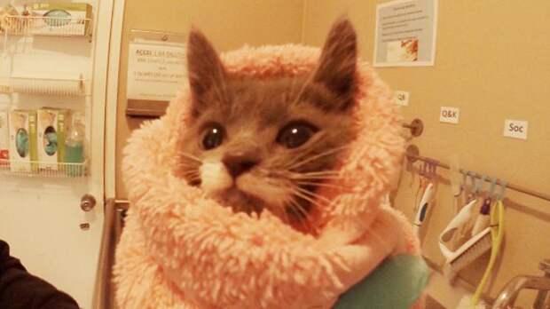 Как выхаживают котят в приютах
