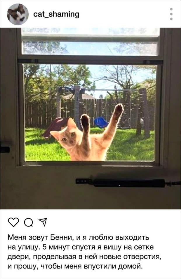 Владельцы котов-тиранов завели инстаграм-канал, где выкладывают последствия проделок своих питомцев