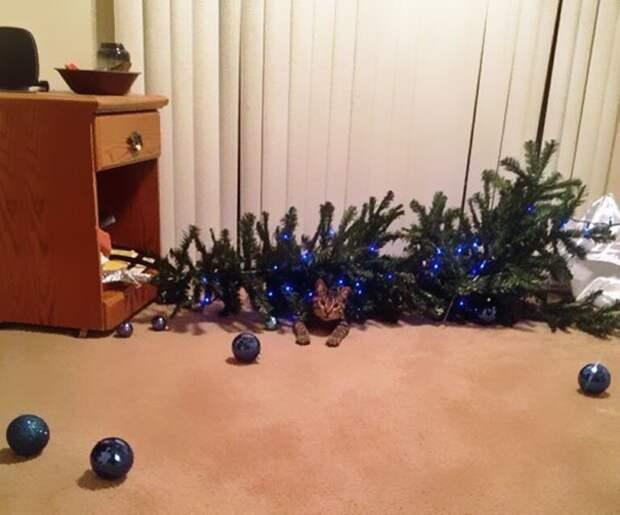 2. Только поставили елку. Простояла минуты три... животные, новый год, праздник к нам приходит, разрушительная сила, рождество, собаки и кошки, юмор