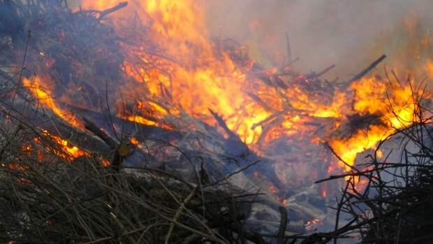 Ущерб от лесных пожаров в Якутии превысил 1 млрд рублей