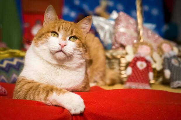 Пятничный котик Джорджио – большой вагон лямура