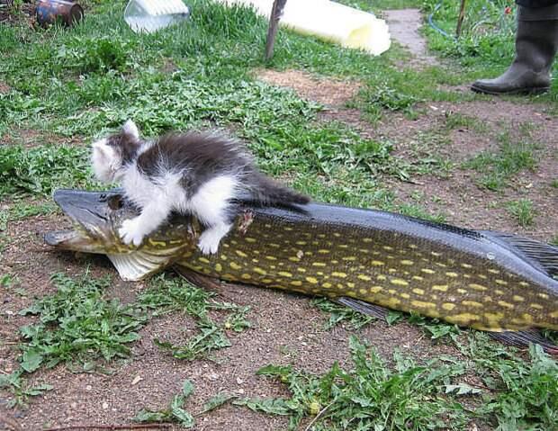 Кошка-эхолот